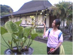 halaman museum prambanan
